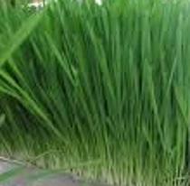 Groen voer